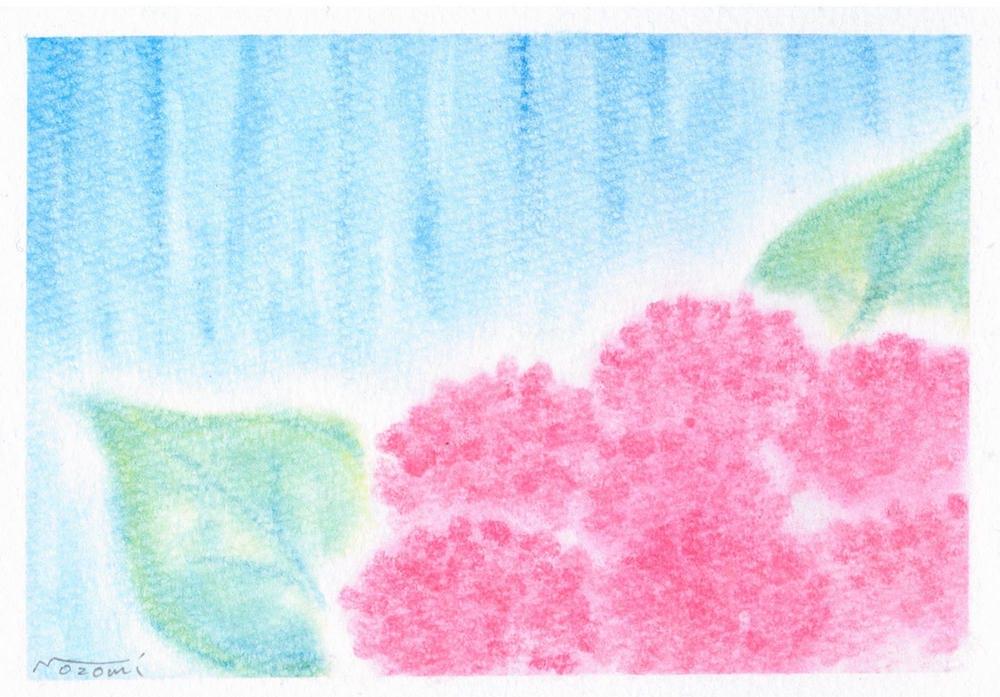 梅雨に咲き誇るピンクの紫陽花のパステルアート作品です。降り注ぐ雨を両手いっぱいに受け止めるようなのびのびとした葉っぱも印象的な絵です。